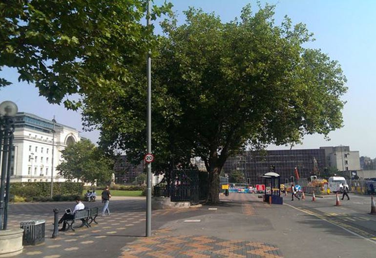 Save Broad Street's only remaining mature tree