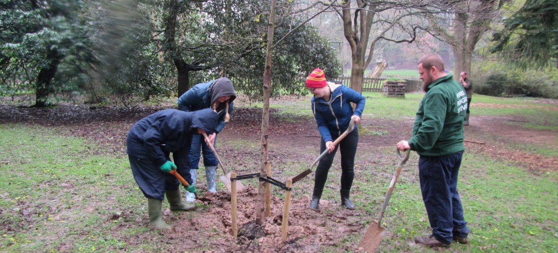 Civic Society Centenary Arboretum takes shape