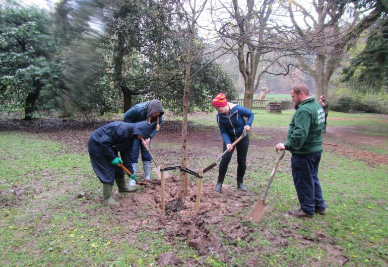 Civic Society Centenary Arboretum takes shape