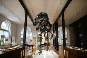 Dinosaur skeleton in middle of museum display, Lapworth Museum Birmingham Civic Society Renaissance Award winner